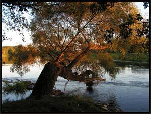 Drzewo II (Dla Aleksandra)