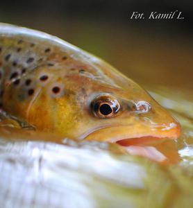 Gold fish:)